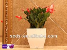 leichuza similarself watering plastic pot plant