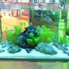DICI glass tank supplies for tank fresh water aquarium tank