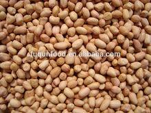 Chinese peanut BOLD JAVA