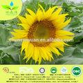 nuovo raccolto di semi di girasole peril paesaggio con alto tasso di germinazione
