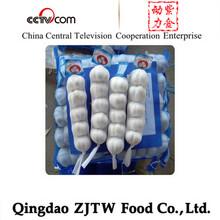 6cm pure white garlic price in China
