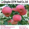 Apple fruit fresh apple price in china