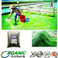 Manufacturer spirulina slimming capsule / price of spirulina tablet / spirulina capsule
