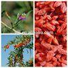 250g Goji berry,ningxia goji berry in bulk