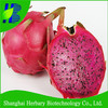 Wholesale tropical fruit seeds dragon fruit seeds