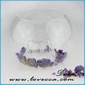 P~many diseños hechos a mano de cristal de la burbuja de aire de la planta& muchos tamaños claro bombilla terrario