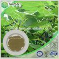 Iso& kosher olive folha extrato/p. E o oleuropein& hidroxitirosol antioxidante natural ingredientes