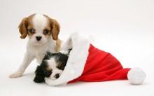 Plush dog in christmas hat velour / velvet Christmas Hat / XMAS hat santa claus hat children and adult