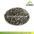 Alta qualidade 5099 24/64 sementes de girassol para venda