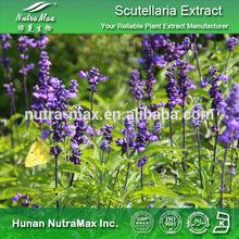 100% Natural Radix Scutellariae Extract,Radix Scutellariae Extract Powder,Radix Scutellariae P.E. 4:1~20:1