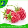 High Yield Raspberry Seeds For Sale