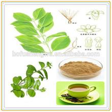 buy gymnema sylvestre plant/gymnema sylvestre/buy gymnema sylvestre seed