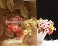 Parede de vidro decorativo/cubo de água padrão de vidro