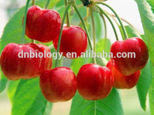 Fruit Polyphenols Natural Acerola Cherry Extract Food,medicine&cosmetic grade