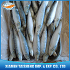 Frozen Sardine Fish For Fishing