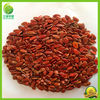 Chinese 2014 cheap big size best dried organic watermelon seeds