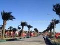 sjh1491107 atacado grande grande data palmeira artificial palmeiras plástico palma