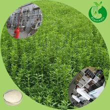 Organic stevia leaf extract/stevia tablet/Stevia sugar