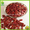 الصينية الجديدة رخيصةأفضل بذور البطيخ