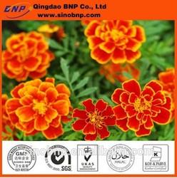 BNP Supply Best Superior Natural Marigold Extract Powder Lutein