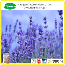 Herbal medicine Lavender extract/High quality Lavender extract powder/Best buy Lavender powder