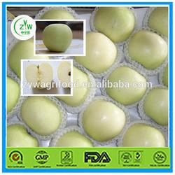 new golden apple/export fresh golden apple/golden apple in bulk