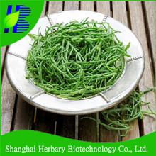 delicioso pickleweed vegetal semillas para la siembra