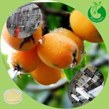 Pure ursolic acid powder loquat leaf loquat leaf extract