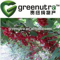 schizandra chinensis extract