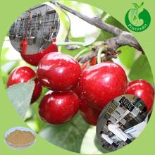 Cherry Fruit flavor powder freeze dried fruit powder cherry powder