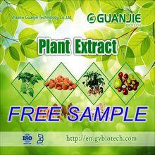 High Quality Organic Yerba Mate extract