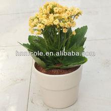 flower decoration soil rich nutrient fertilizer akadama bonsai clay soil
