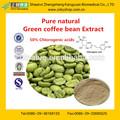 fornitore porcellana caffè verde acido clorogenico estratto di fagiolo