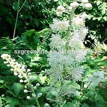 100% Natural Organic Black Cohosh Herb Extract CAS NO:84776-26-1