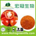 Spray dried poudre de tomate/soupe à la tomate en poudre