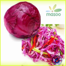 2014 crop Natural Color Chinese Fresh Red Cabbage Red, High Quality Natural Colour Cabbage Red