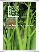 Pure Natural Angelica utilis Extract/ Ashitaba Powder