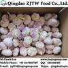 Pure White Garlic, 3Pcs/Net, Chinese Pure White Garlic Without Bottom Price