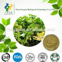 Chinese Herbal Extract Powder Chicory powder 99% inulin