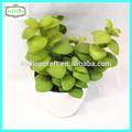 17cm real toque alta qualidade mini-artificial plantas suculentas