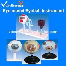 Modèle d'enseignement modèle eye instrument globe oculaire