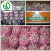 2014 Fresh Red Garlic / natural garlic with good quality in china