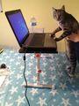 ordenador portátil de mesa giratoria