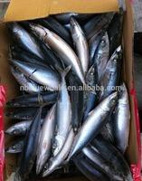 frozen mackerel (scomber scombrus)