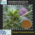 100% natural 45% saponinas pure Tribulus Terrestris extrato