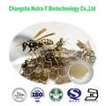 melhor preço de veneno de abelha comprar bee venom produção
