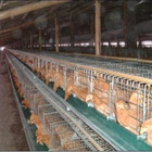 Galvanized welded chicken wire cage mesh