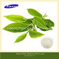 Galato de epigalocatequina( egcg) 40% 80% los polifenoles del té verde extracto