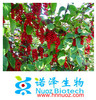 2014 hot sale natural organic schisandra chinensis powder/20% schisandra berry extract/Top Quality from professional manufacture