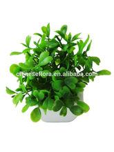 204 hot sell /decoration craft /Decorative artificial grass bonsai